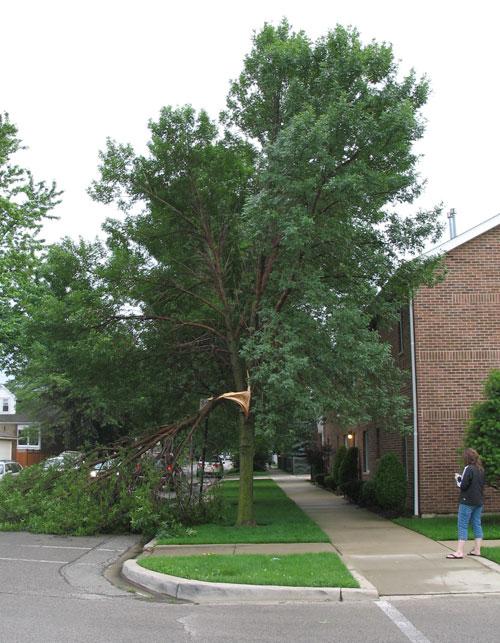 Damaged Tree at the Condo