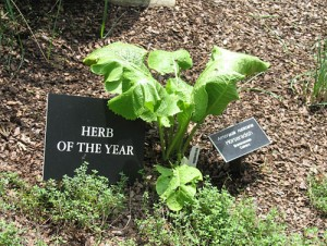 Herb of the Year?